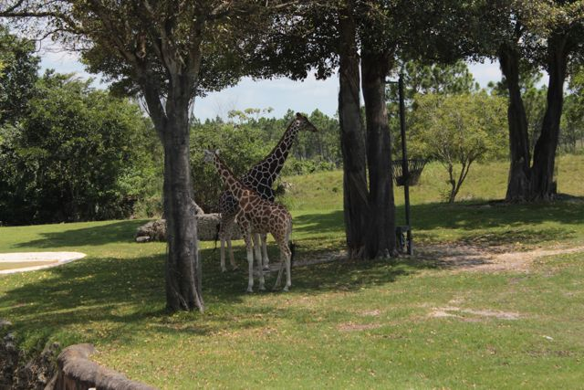 Exploring Zoo Miami