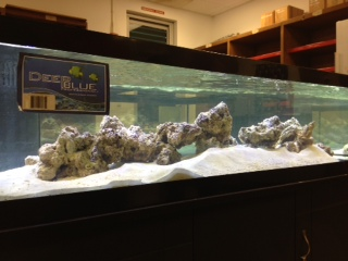 One of our new coral tanks in the coral lab all lite up.