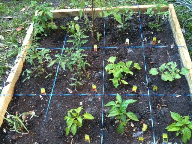 This garden is full with tasty vegetables!