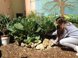 Freshman Annie Farrell tends to the Coral Gables' garden.