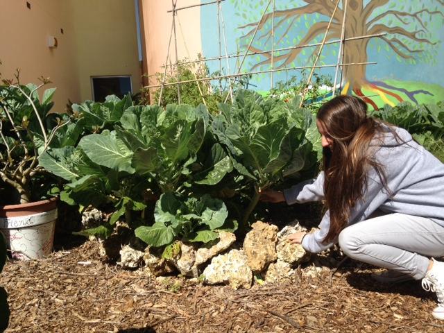 Freshman Annie Farrell tends to the Coral Gables' garden.