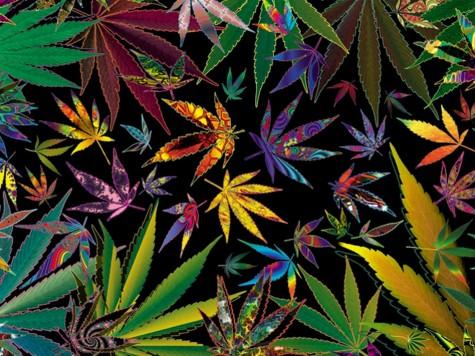 Should Marijuana be Legalized in Florida?