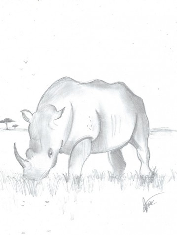 Rhinos on the Road to Extinction