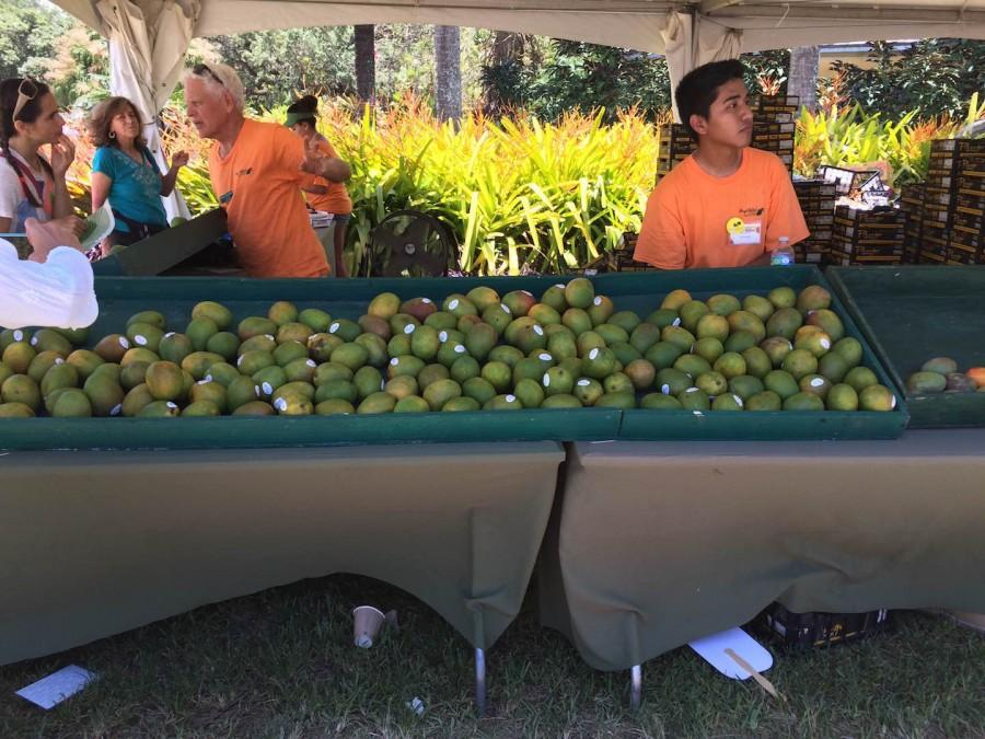 Delectable mangoes were laid out for all visitors to purchase.