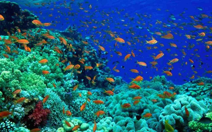 Our oceans are home to a diverse animal population that is being threatened by the actions of man.
