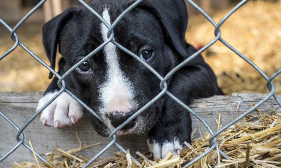 A new law in Arizona ruled that all dogs and cats sold in pet stores must come from animal shelters or non-profit organizations.