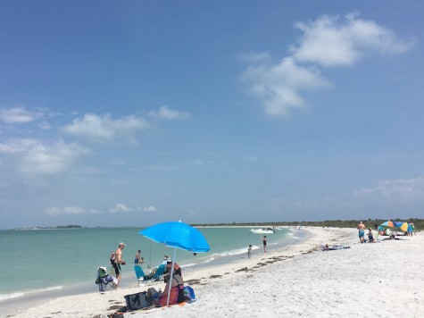 Cayo Costa State Park is perfect for those who want to disconnect from the modern world and simply connect with nature