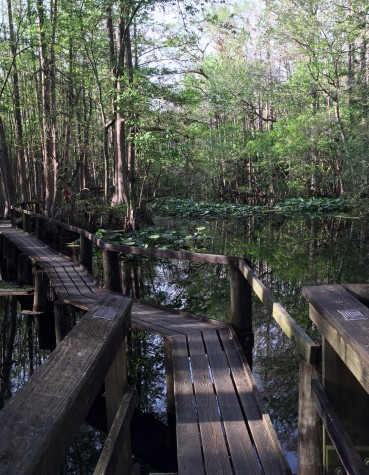 Highlands Hammock State Park has beautiful nature trails including the Cypress Boardwalk.