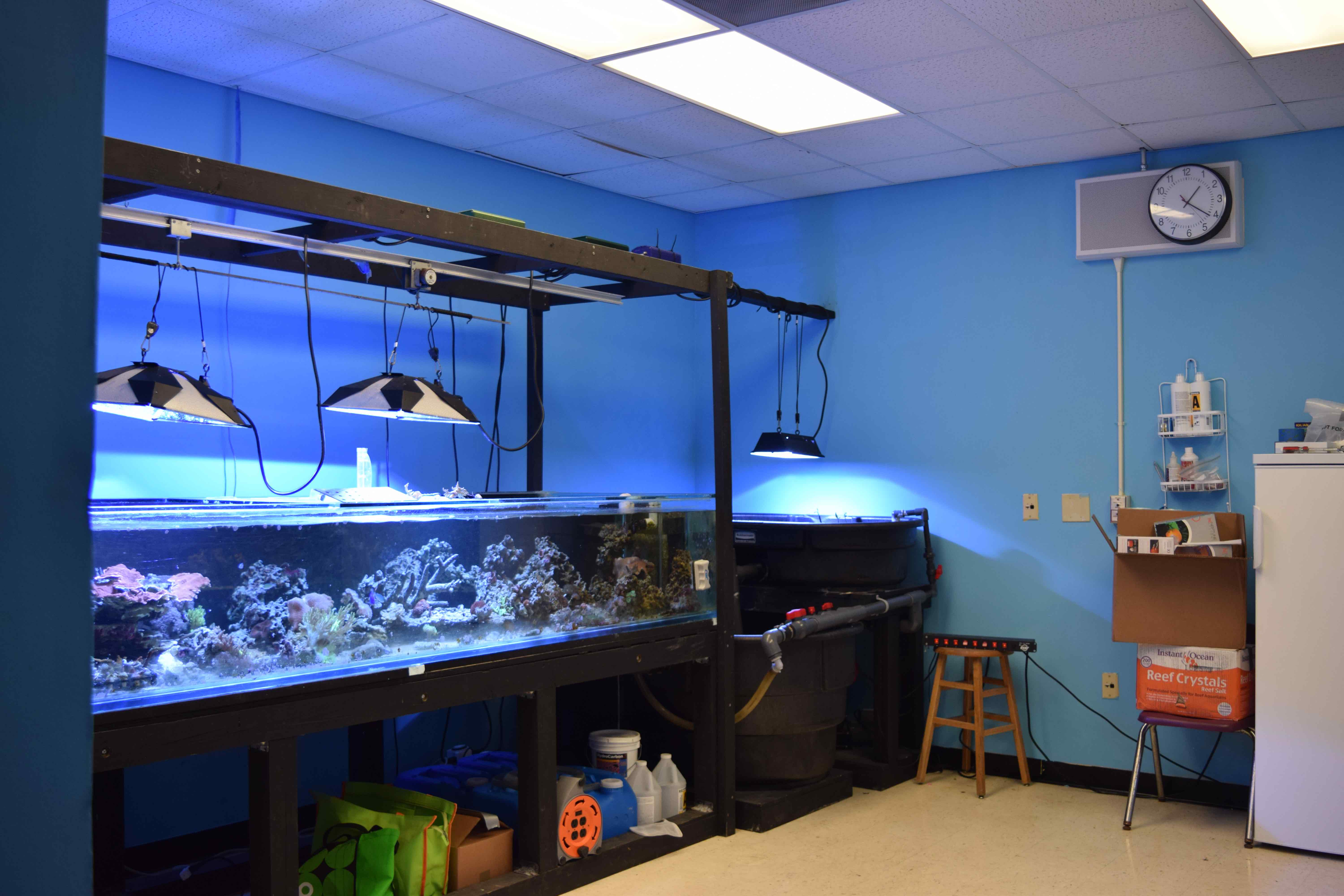 The coral lab has grown from two medium sized tanks to a full, big, tank.