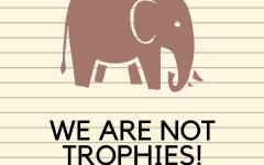 Elephants: Poaching into Extinction