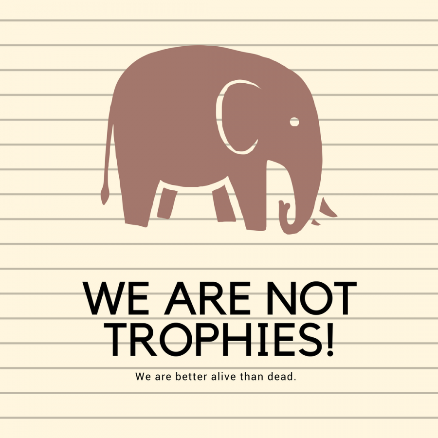 Elephants+are+intelligent+animals+that+deserve+much+more+than+being+treated+as+a+prize.+