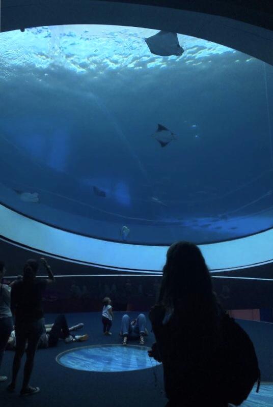 The Frost Museum's famous Aquarium.
