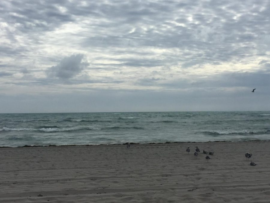 Florida's Key Biscane Beach  is one of the many affected by the red tide of algae.