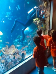 Miguel Lemus Campers observe a scuba diver at the forst Museum of Science where students interned.