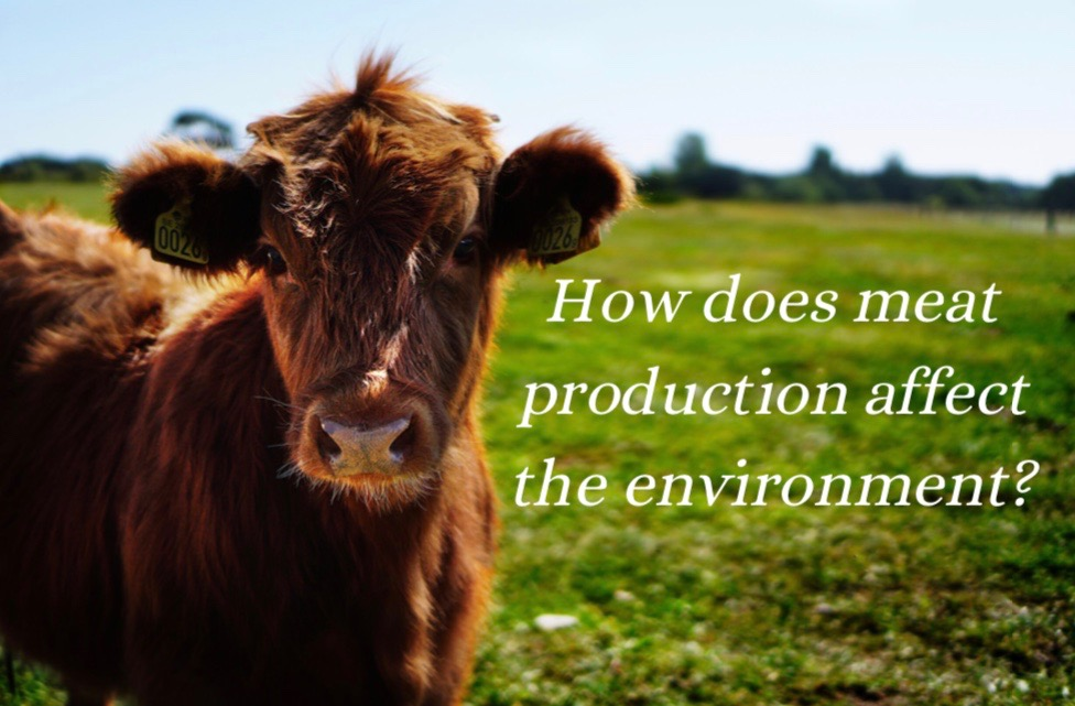 Meat consumption has a massive impact on climate change, and it is growing more and more evident by the day.