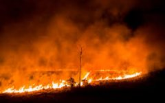 Amazon Rainforest: Why is it burning?