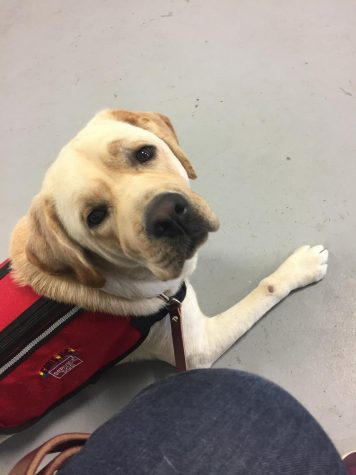 Say Hello to Will, the First On-Campus Service Dog