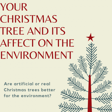 Your Christmas tree significantly affects the environment when they are being bought on a global level, so be sure to make the appropriate choice this holiday season.