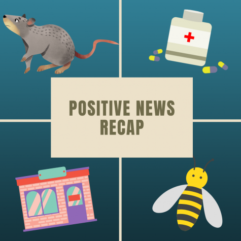 From award winning rats to an increase in bee populations, this is the top four positive news recap