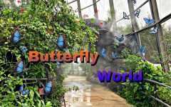 When Butterfly World was first founded in 1988 there were only 300 butterflies.