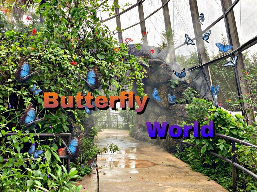 When+Butterfly+World+was+first+founded+in+1988+there+were+only+300+butterflies.