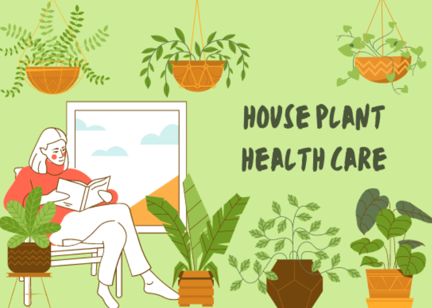 Interested in being a plant-parent? Read through this simple guide for information on how to keep a healthy, green home.