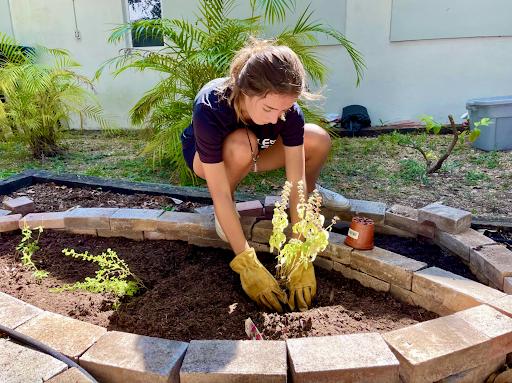 Marina Devine en un día soleado trabajando en el jardín comunitario, ella, Chico y otros estudiantes de Gables han trabajado duro en la construcción juntos.