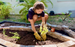 Marina Devine on a sunny day working on the communal garden she, Chico and other Gables students have worked hard on building together.